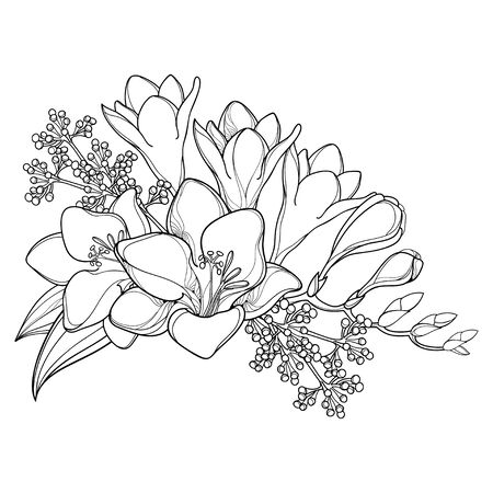 Bouquet of outline Freesia flower, bud and leaves isolated.