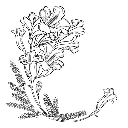 Corner bouquet of outline Jacaranda flower and leaves in black isolated. 向量圖像
