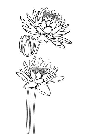 Bouquet of outline Lotos or water lily flower and bud isolated.