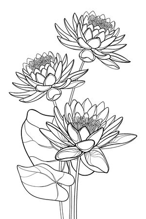 Bouquet of outline Lotos or water lily flower and leaf isolated.