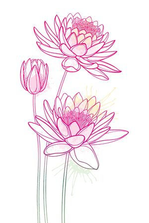 Bouquet of outline Lotos or water lily flower and bud in pink isolated.