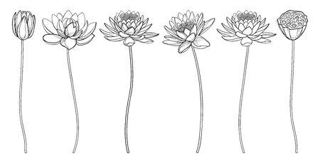 Set of outline Lotus flower, bud and seed pod in black isolated. Ilustração