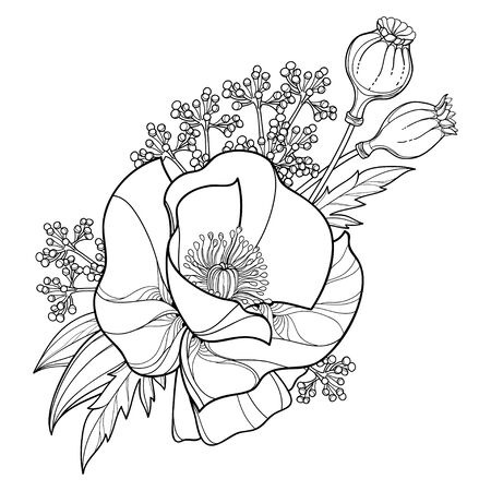 Bouquet of outline Poppy flower, seed and leaves isolated. 向量圖像