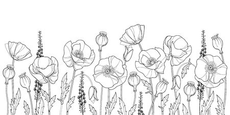 Field with outline Poppy flower, seed and leaves isolated.