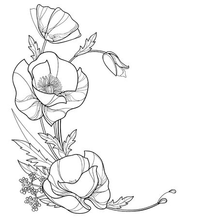 Corner bouquet of outline Poppy flower, bud and leaves isolated.