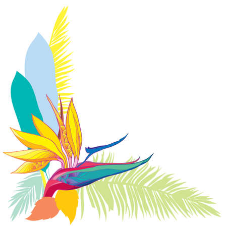 Corner bouquet of tropical Strelitzia reginae or bird of paradise flower and palm leaf isolated. Ilustração