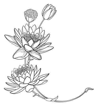 Corner bouquet of outline ornate Lotus or water lily flower in black isolated.