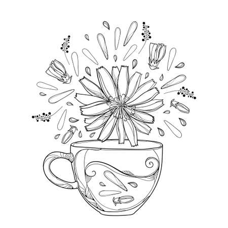 Cup of Chicory herbal tea with petals and flower in black isolated on white background.