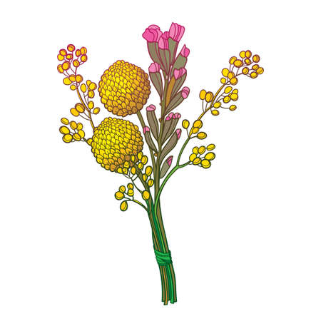 Boutonniere with outline craspedia or billy buttons flower in yellow isolated on white background.