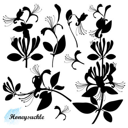 Set of silhouettes Honeysuckle with flower, bud and leaf in black isolated on white background. 矢量图像