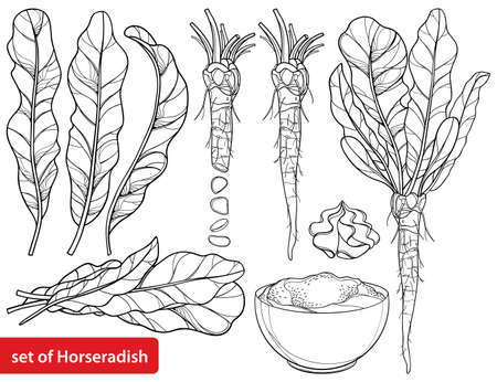 Set of outline Horseradish with leaf, root and chrain sauce in black isolated on white background.
