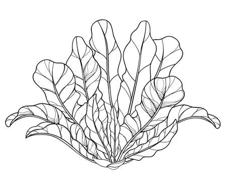 Bush of outline Horseradish with leaf in black isolated on white background. 矢量图像