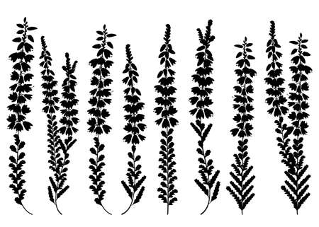Set of Heather or Calluna flower silhouettes in black isolated on white background.