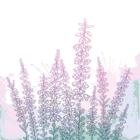 Field with outline Heather or Calluna in pastel pink on the white background. 矢量图像