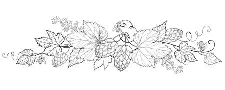 Bunch of outline Hop leaf and cones in black isolated on white background. 矢量图像