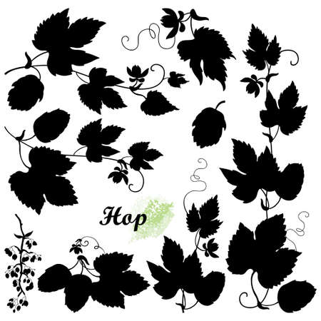 Set with silhouettes of Hop with leaf, cones and flower in black isolated on white background.