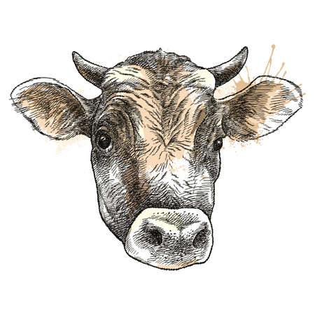 Hand-drawn sketch of Bull head (Jersey breed) in brown isolated on white background.