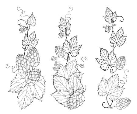 Set with vertical bunch of outline Hop with leaf, cones and flower in black isolated.