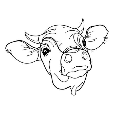 Outline horned Bull head (Jersey breed) in black isolated on white background.