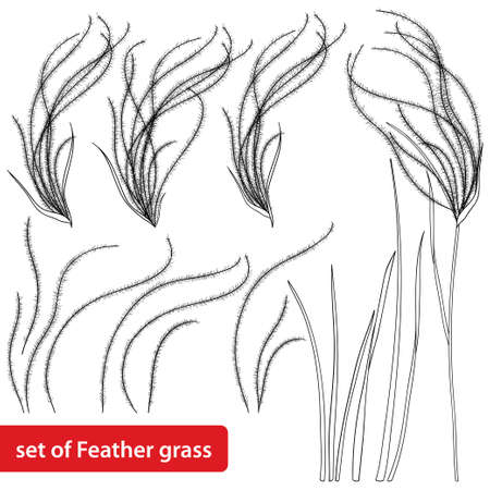 Set of outline Stipa or Feather grass in black isolated on white background. Ilustracja