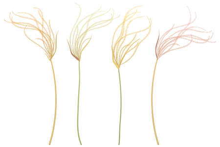 Set of outline Stipa or Feather grass in pastel beige isolated on white background.