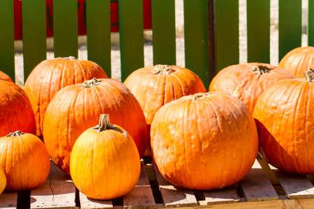 Pumpkins for carving Фото со стока