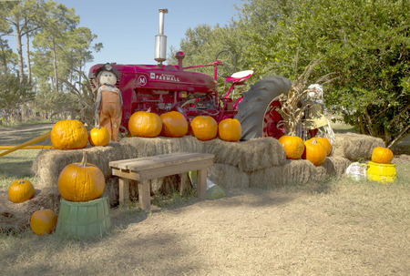 Pumpkins and scarecrow in front of tractor