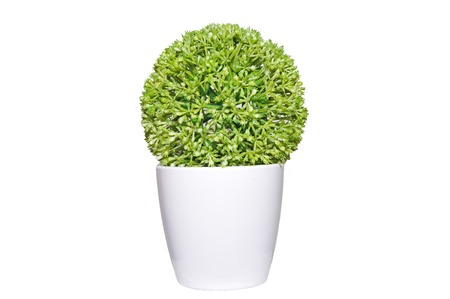 The small tree in white potflower  Stock Photo