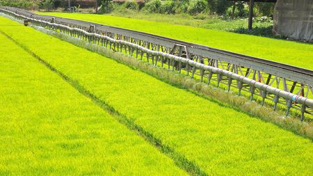 Machine is pouring water to wheat grass farm in Thailand.