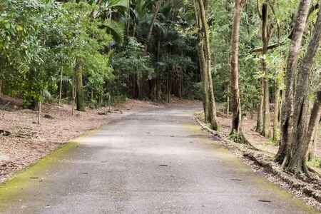 a view of a rural road between green tropical trees and humidity