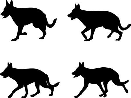 shepard: german shepard - vector