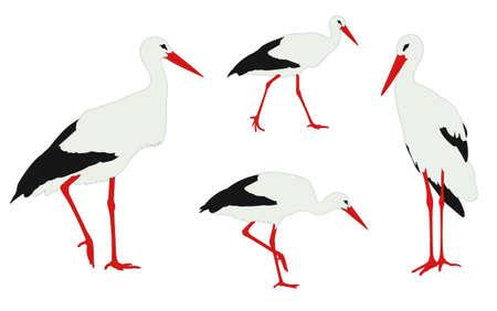 wader: storks illustration - vector