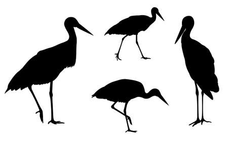 storks silhouettes - vector Vector