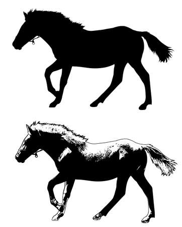 trot: horse silhouette and illustration - vector