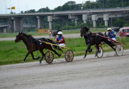 hippodrome: BELGRADE,SERBIA - JUN 19: Trotting Races at the Belgrade Hippodrome on Jun 19, 2016 in Belgrade, Serbia