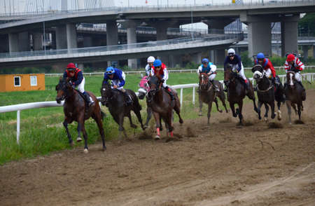 hippodrome: BELGRADE,SERBIA - JUN 19: Unidentified horses and jockeys galloping in race at the Belgrade Hippodrome on Jun 19, 2016 in Belgrade, Serbia