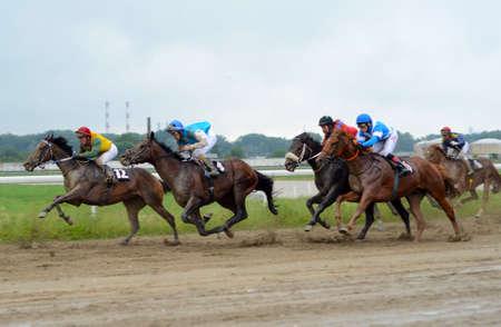 racehorses: BELGRADE,SERBIA - JUN 19: Unidentified horses and jockeys galloping in race at the Belgrade Hippodrome on Jun 19, 2016 in Belgrade, Serbia