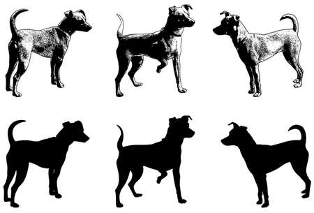 pincher: silhouettes and sketch illustration of mini pincher dog - vector