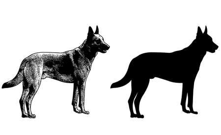 german shepherd dog: german shepherd dog silhouette and sketch illustration - vector Illustration