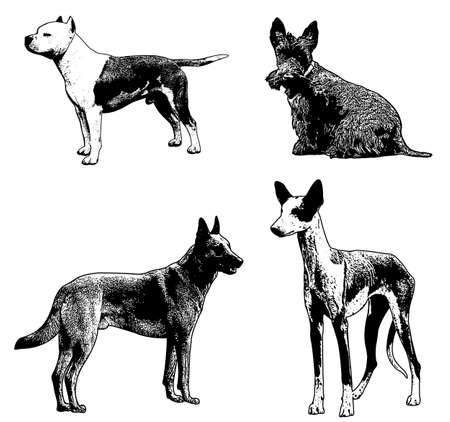 dog breeds sketch illustration - vector