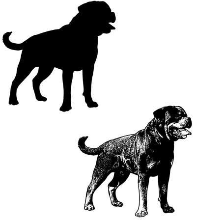 ロットワイラー犬のシルエットとスケッチ イラスト - ベクトル