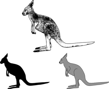 kangaroo sketch and silhouette - vector