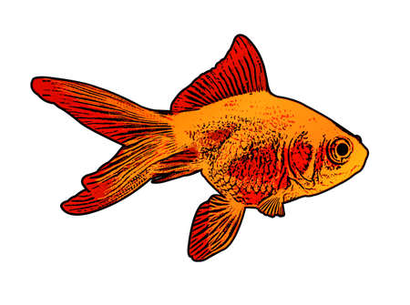 Gold fish illustration