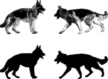 German shepherd dog silhouette and sketch- Vector illustration.