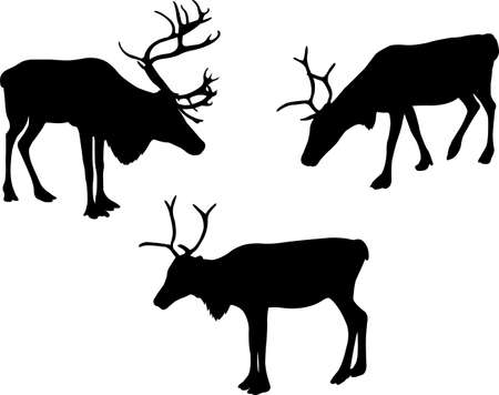 reindeer or caribou silhouettes - vector
