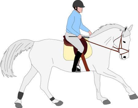 horse riding colored illustration - vector Ilustração