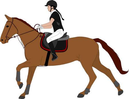 young woman riding horsecolor illustration. Equestrian sport. Equestrian dressage - vector Illustration