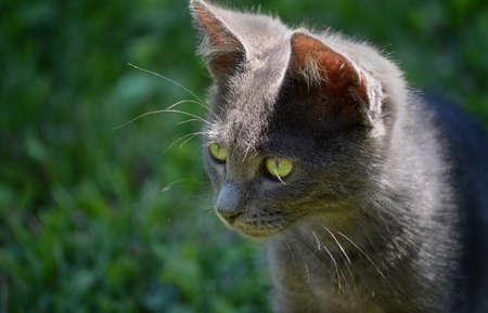 portrait of beautiful kitten