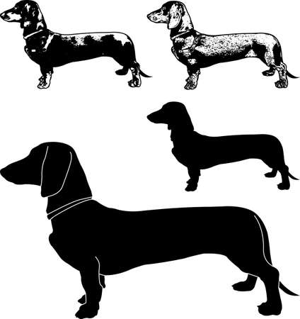 dachshund dog silhouette and sketch illustration - vector Ilustração