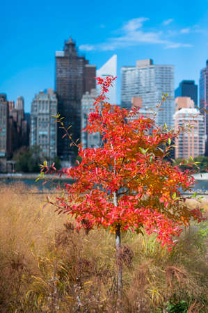 Different colors of leaves during Autumn New York City Stok Fotoğraf